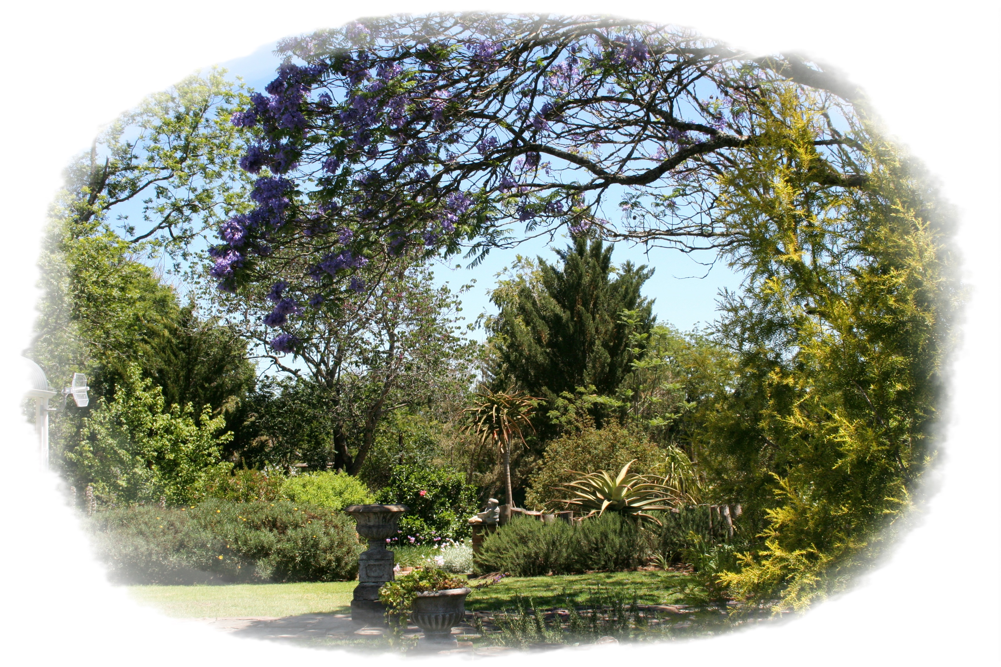tpotg-under-jacaranda-trees-with-frame-01